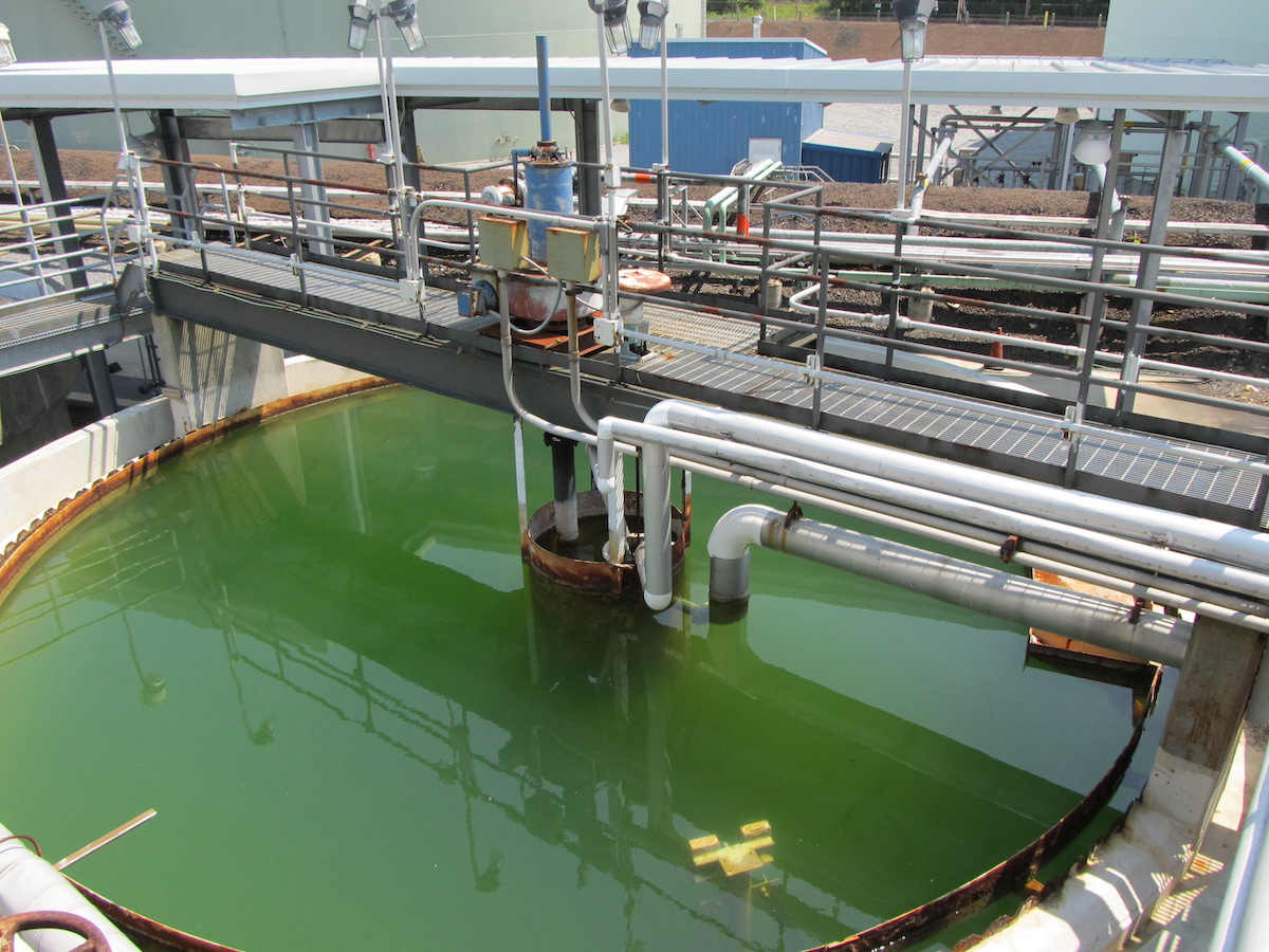 wastewater toxicity testing